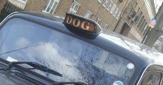 not a taxi, a dogxi